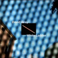 David Gray-White Ladder