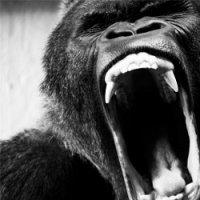 Ape Shifter-Ape Shifter