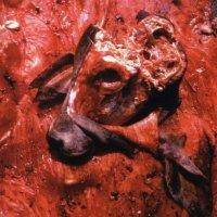 Cattle Decapitation — Human Jerky (1999)