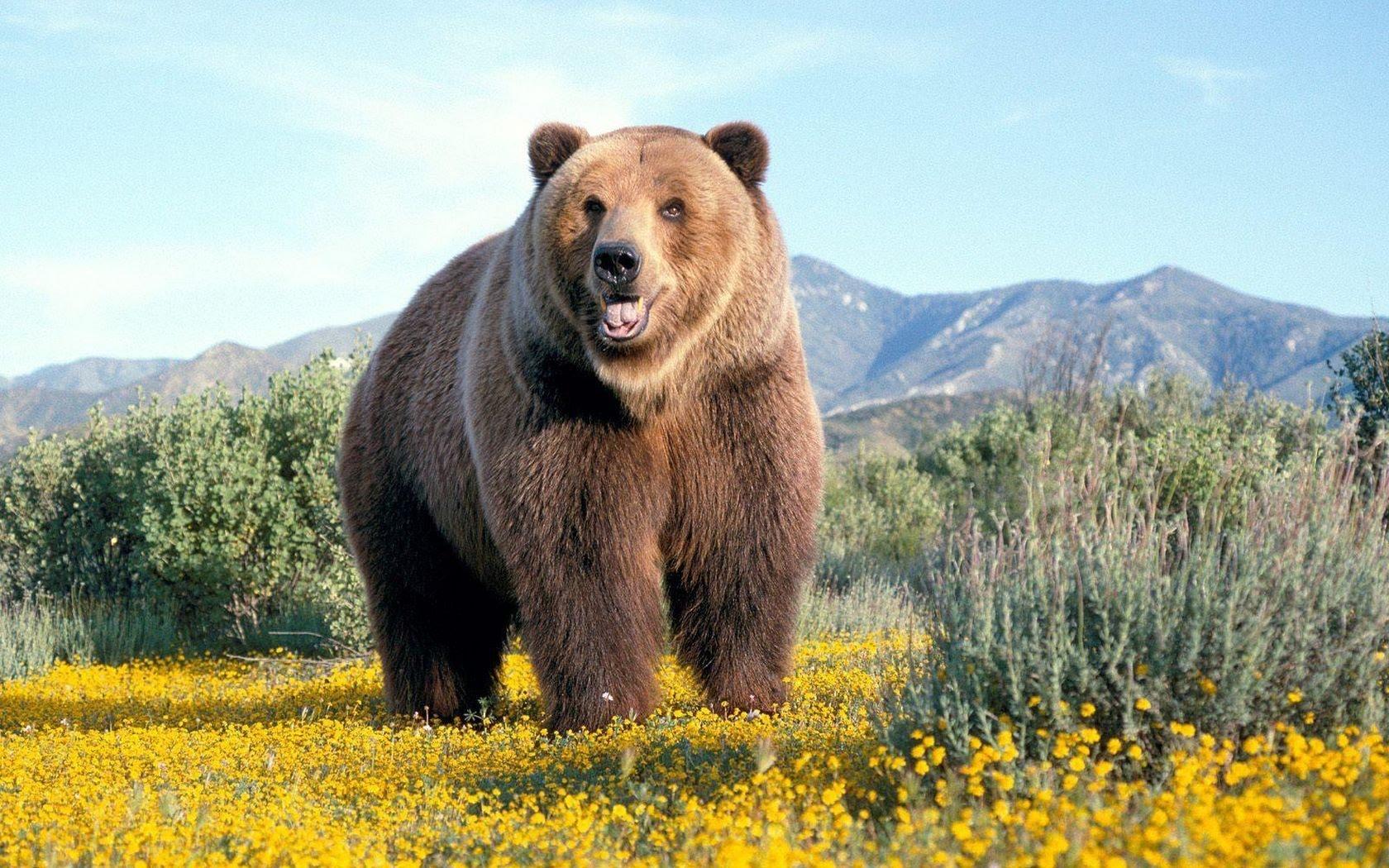 Интересные изображения медведей